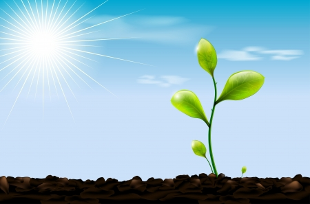 saplings: Green sprout , soil and blue sky with sun and clouds Illustration