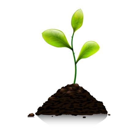 plants growing: Germoglio verde su sfondo bianco - illustrazione vettoriale