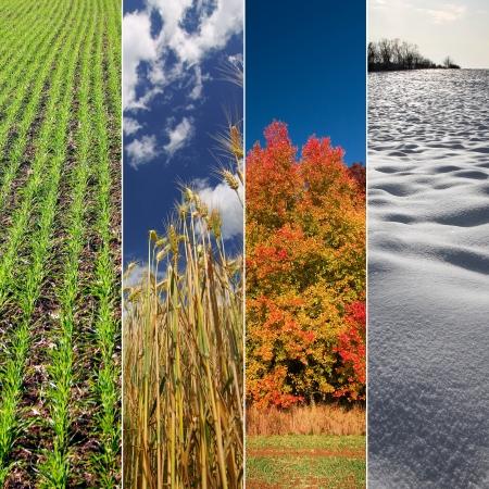4 つの季節春、夏、秋、冬垂直バナーします。