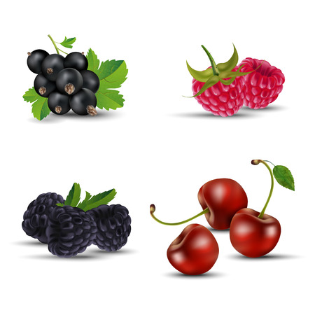 blackberries: Set of fruits - blackcurrant, raspberry, blackberry and cherry. Isolated on white background - vector illlustration.