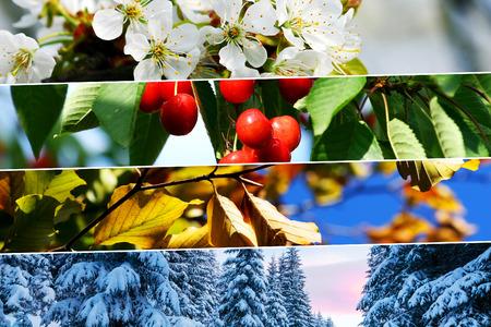 four season: Four season collage - horizontal banners. All used photos belong to me.