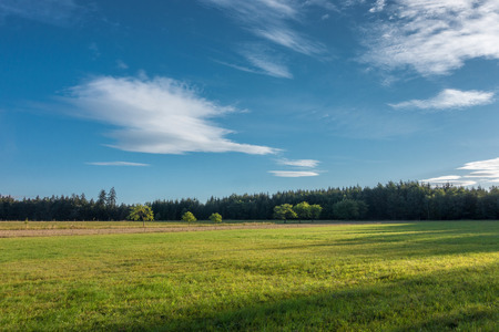 grassfield: Amazing summer morning in nature - countryside with grassfield, forest and blue sky with white clouds Stock Photo