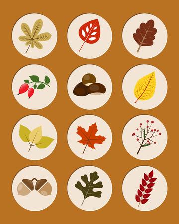 feuille arbre: Ensemble de la nature des symboles d'automne - feuilles et fruits. Vector illustration.