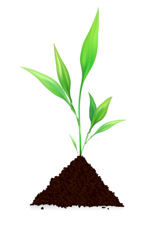 rural development: Pile of dirt and plant growing - isolated on white background. Vector illustration. Illustration
