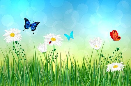 Spring or summer abstract meadow with daisy flowers and butterflies - vector illustration
