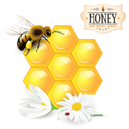bee on white flower: Bee, honeycomb, daisies and honey label - isolated on white background. Vector illustration.
