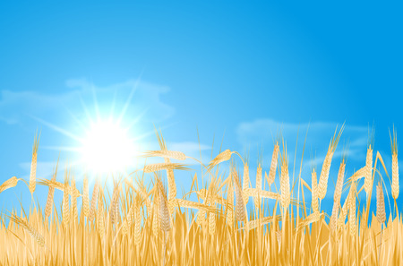 cornfield: Abstract summer landscape with barley cornfield, sky, sun and clouds - vector illustration