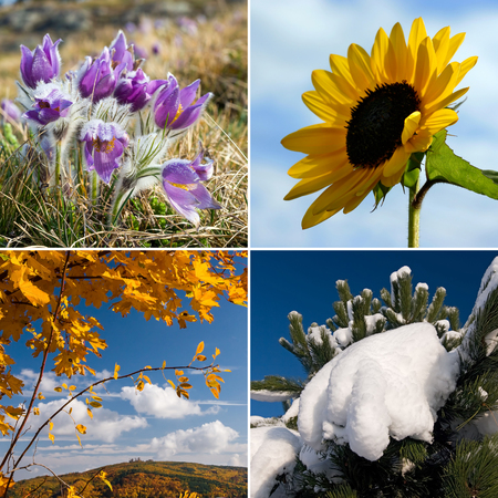 four season: Four season nature collage in squares - all used photos belong to me