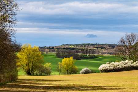 yellow flower tree: Amazing colorful spring landscape with flowering bushes under blue sky - Czech Republic, Europe