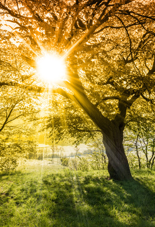 Morning sun rays through tree branches - spring or summer nature motive 스톡 콘텐츠