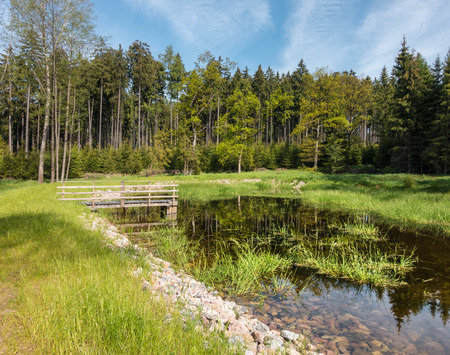 czech republic: Amazing forest pond with crystal clear water under blue sky in spring forest - Czech Republic, Europe Stock Photo