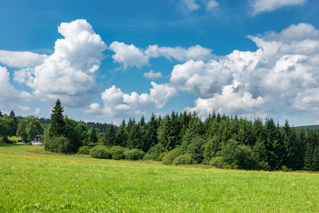 grassfield: Amazing summer landscape with meadow, forest, cottage and blue sky with beautiful white clouds