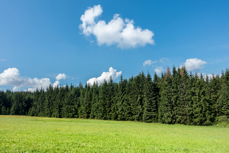 grassfield: Amazing summer day in nature - countryside with grassfield, forest and blue sky with white clouds