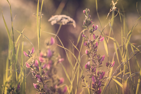 Detail from summer meadow with flowers, grass and dreamy atmosphere