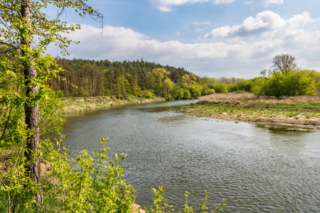 Spring landscape with river, forest and blue sky with white clouds. Morava river, Czech Republic, Europe. Stock Photo
