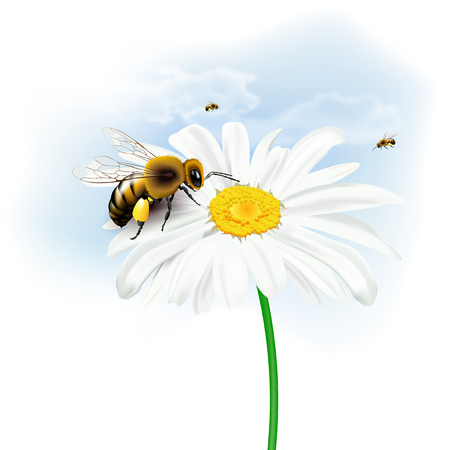 Still life with bees, daisy flower and sky with clouds on white background. Vector illustration.