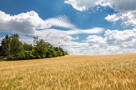 atmosphere: Rural summer landscape with field of corn, green trees and blue sky with clouds - Czech Republic, Europe