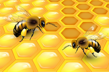 Two bees on honeycomb - vector illustration