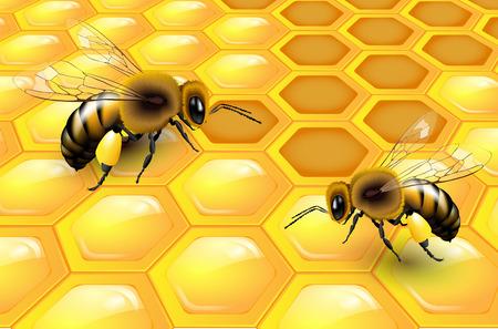 Twee bijen op honingraat - vectorillustratie