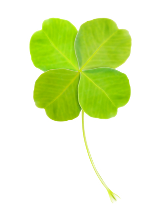 Realistic vector illustration of green clover leaf - isolated on white background