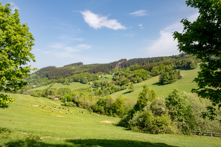 Cows on green pasture under blue sky - amazing spring landscape in Czech Republic, Europe 스톡 콘텐츠
