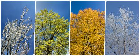 Collage di quattro stagioni da bandiere verticali con alberi e cielo blu. Tutte le foto usate appartengono a me.