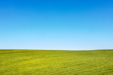 Minimalistyczne ujęcie wiosennego lub letniego krajobrazu z zielonym polem i błękitnym niebem - miejsce na Twój tekst. Czechy, Europa.