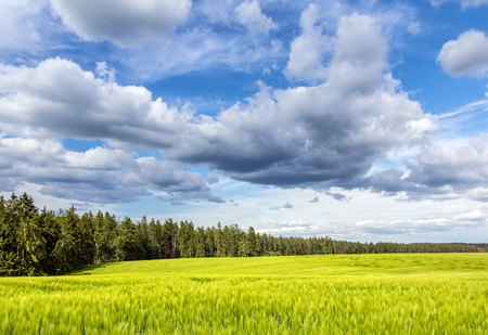 Green field and forest under beautiful blue sky with clouds - Czech Republic, Europe