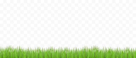 Green grass on transparent background - place for your text. Vector illustration.