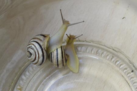 slink: Two snails