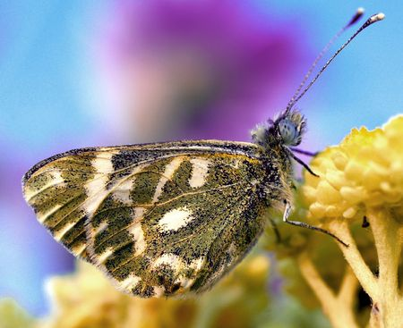 to flit:  butterfly Stock Photo