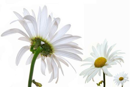 isolated flowers Stock Photo - 2662623