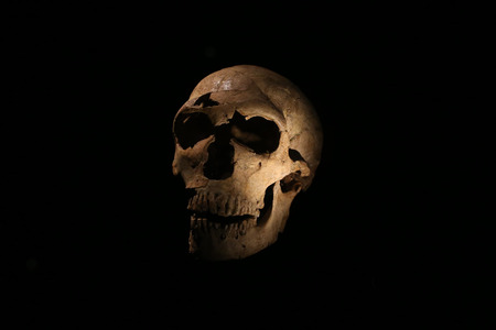 habilis: Skull of a caveman on a black background