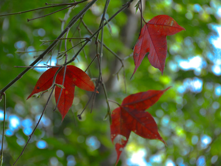 on leave: fall leave Stock Photo