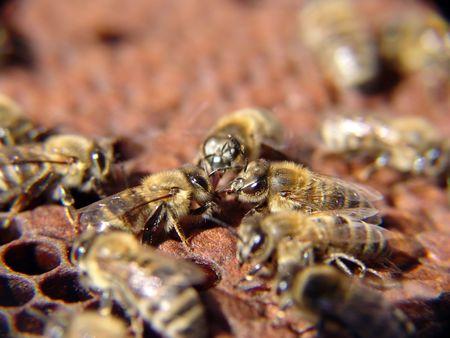 queen bee: miel de abejas el trabajo en equipo  Foto de archivo