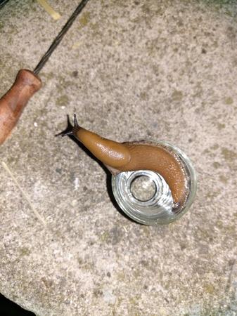 thirsty Spanish slug (apricot brandy)