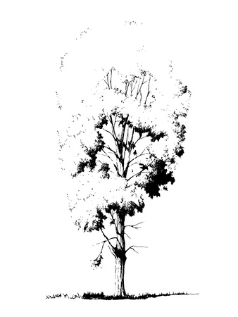 Sketched silhouette of poplar tree