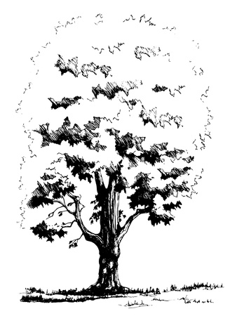 Sketched silhouette of maple tree.