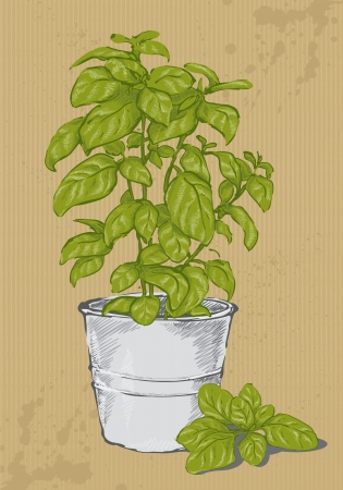 Potted basil Иллюстрация
