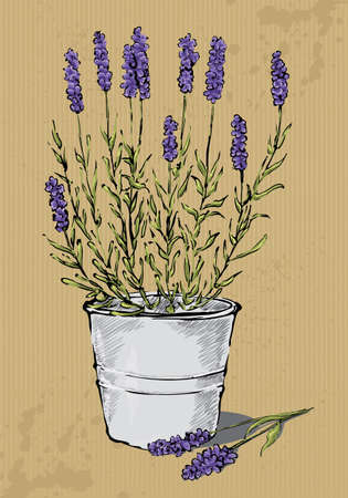 pot: Potted lavender