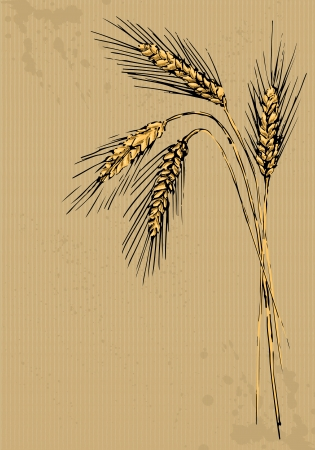 cereal plant: Ears of rye painted on packing paper
