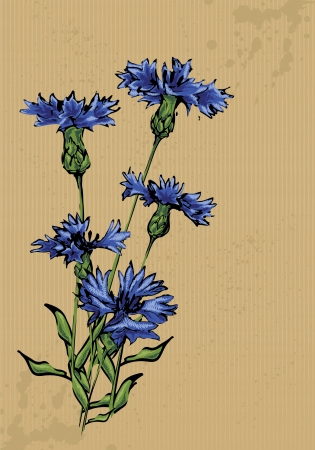 Cornflowers painted on packing paper Illustration
