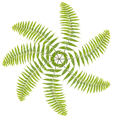 Propeller made of fern leaves on white background   photo