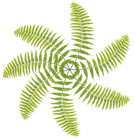Propeller made of fern leaves on white background Stock Photo - 26450516