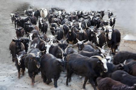 instinct: herd Instinct