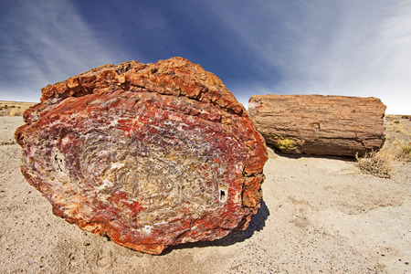 Beautiful Petrified Tree, Fossilized Trunks from the Triassic Period - Petrified Forest National Park, Arizona, USA  photo