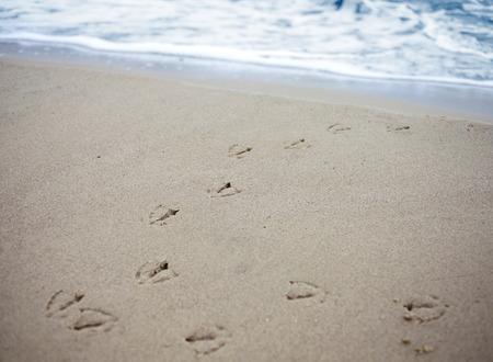 vogelspuren: Vogelspuren im Sand von einem Strand mit Vignettierung und flachen Bereich der Tiefe Lizenzfreie Bilder