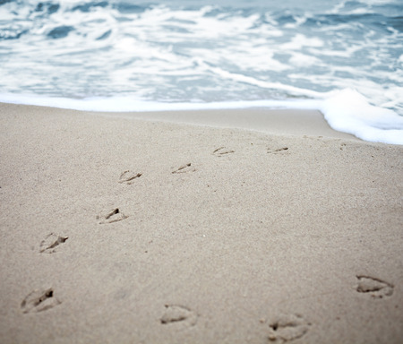Bird tracks in sand of a beach with vignetting effect and shallow field of depth   photo