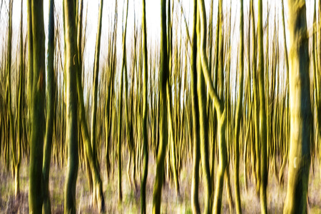 Motion blurred forest background  photo