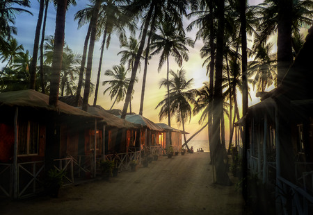 Beautiful view of palms silhouettes against sun, Goa, India  photo